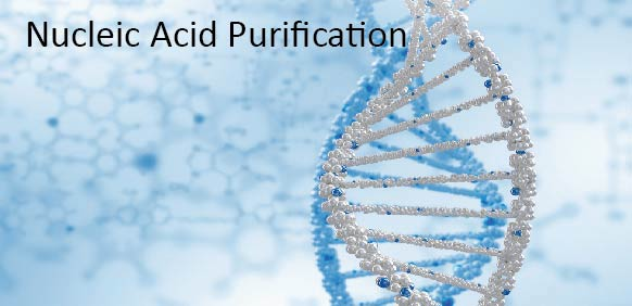 nucleicacidpurification2